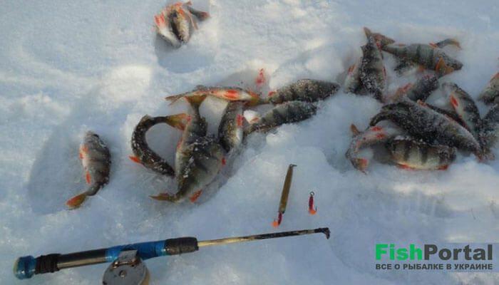 Отвесное блеснение зимой: советы опытных рыболовов