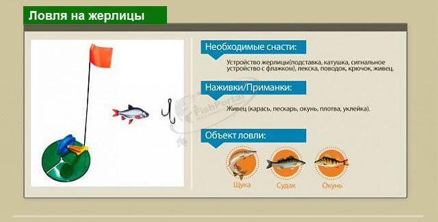 Способы ловли рыбы зимой инфографика жерлицы