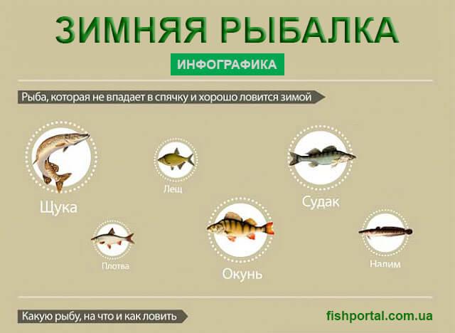 Способы ловли рыбы зимой в Украине