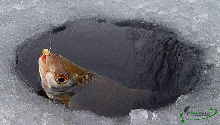 Календарь рыбака на 10-20 февраля: ловля щуки, леща и плотвы
