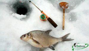 Ловля подлещика зимой в глухозимье: повадки и особенности оснастки