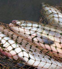 Правила для рыбаков в Украине могут измениться