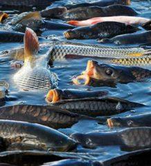В Украине появится сертификат происхождения рыбы и системы мониторинга вылова