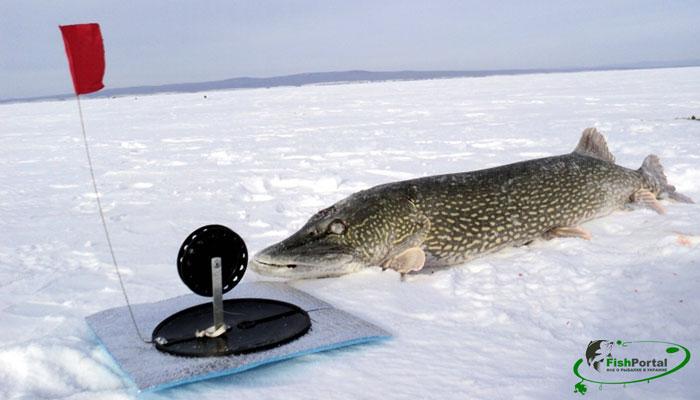 ловить рыбу флажками