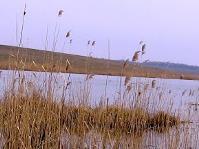 Озеро в Слобода Межировская