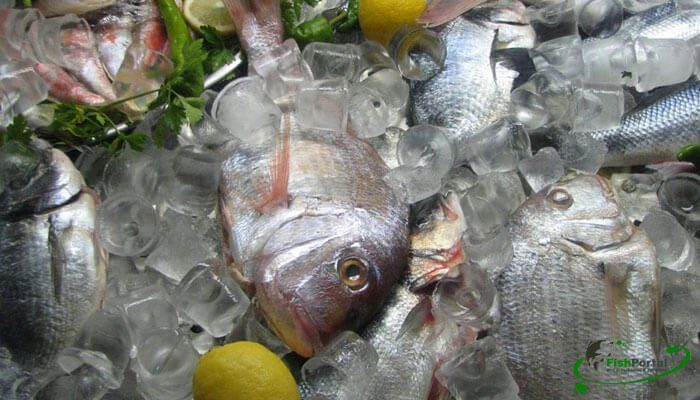 В 2016 году Украина увеличила экспорт рыбы на 39%