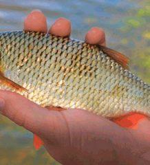 Календарь рыбака апрель 2017: прогноз клева хищников и мирных рыб