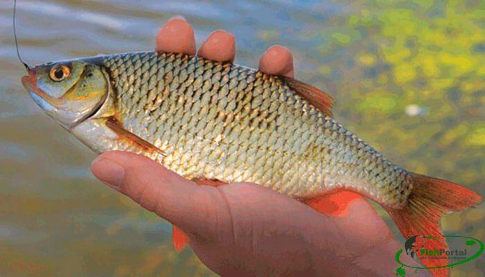 мартовская ловля рыбы