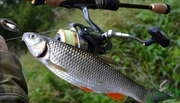 Рыбалка на реке Прут в Черновицкой и Ивано-Франковской областях