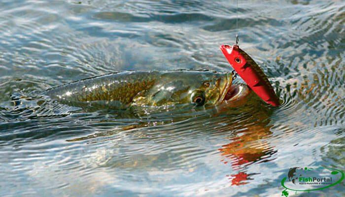 Календарь рыболова на неделю 3-9 апреля 2017 года