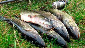 Щука в мае: повадки и условия успешной ловли