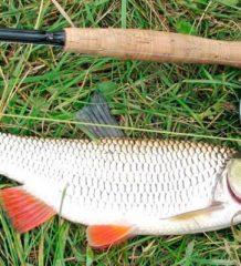 Календарь рыбака июнь 2017 года: прогноз клева мирных и хищных рыб