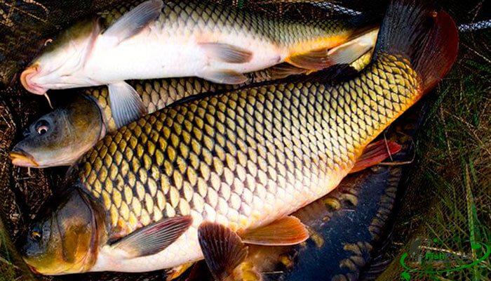 Удачная летняя рыбалка секреты