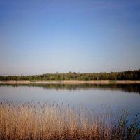 """Озеро """"Кричевичи"""""""