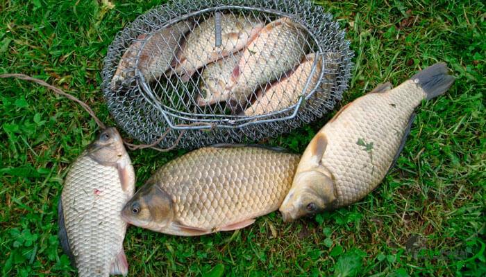 прогноз клева рыбы в волгоградской области рыбхоз