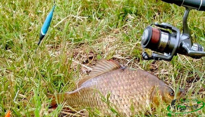 Календарь рыбака на неделю 17-23 июля: ловля карася, сома и леща