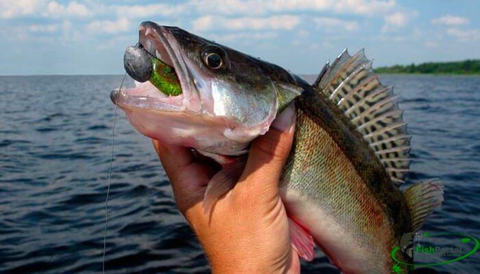 Календарь рыбака на неделю 24-30 июля: как и что успешно ловить