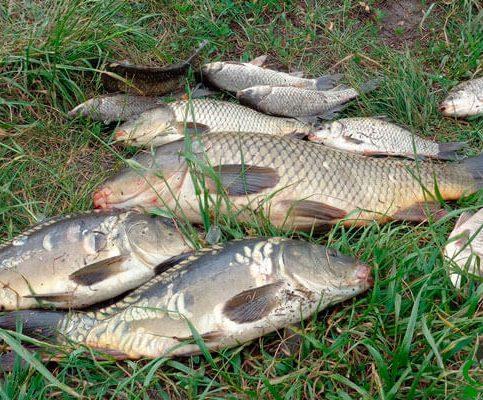 Календарь для рыболовов на неделю 14-20 августа