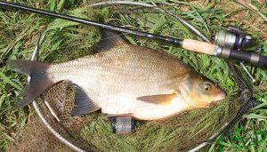 Лещ в августе и календарь рыболова