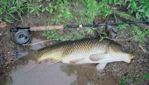 Сазан и карп в августе и прогнозы рыболовного календаря
