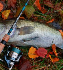 календарь рыбака на неделю 1-6 ноября