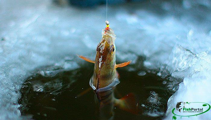 Лунный календарь рыболова на неделю с 29 января по 4 февраля