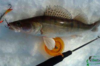 Судак по первому льду ловля снасти места рыбалки фото