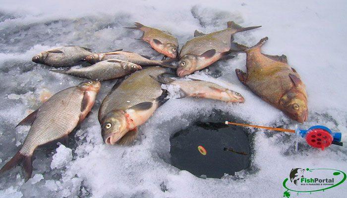 Календарь рыбака на неделю с 26 февраля по 4 марта 2018