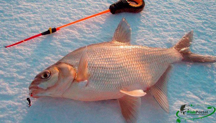 Клев рыбы на неделе с 19 по 25 февраля
