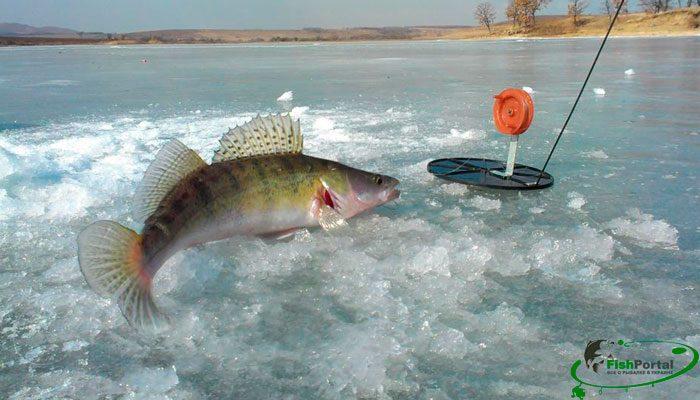 Лунный календарь рыболова на февраль 2018: благоприятные и плохие для рыбалки дни