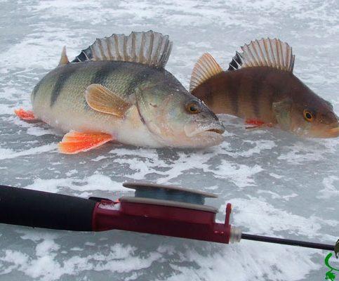 Прогноз клева рыбы на неделю с 5 по 11 февраля 2018 рыбалка изображение фото