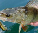 Клев рыбы с 5 по 11 марта