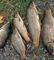 Календарь рыбака на неделю с 25 июня по 1 июля: что и как ловить