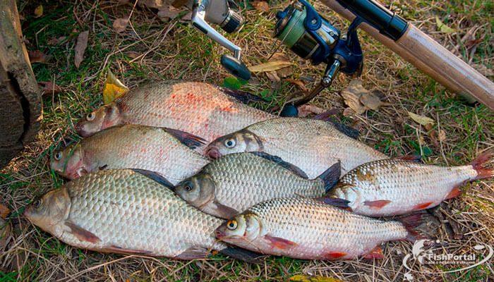 Календарь рыболова на неделю 18-24 июня: что, где и как ловить