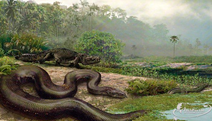 Самая огромная змея титанобоа фото