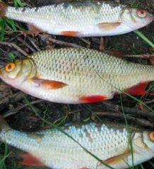 Календарь ловли рыбы на неделю 2-8 июля: в какие дни будет лучший клев