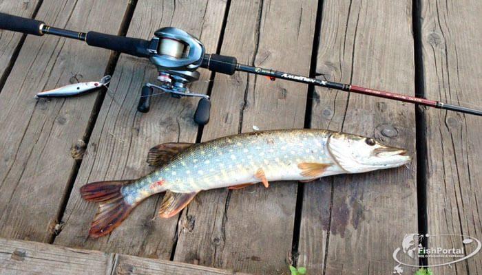прогноз клева рыбы в жлобине