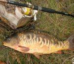 Осенняя рыбалка на карта: как выбрать приманку